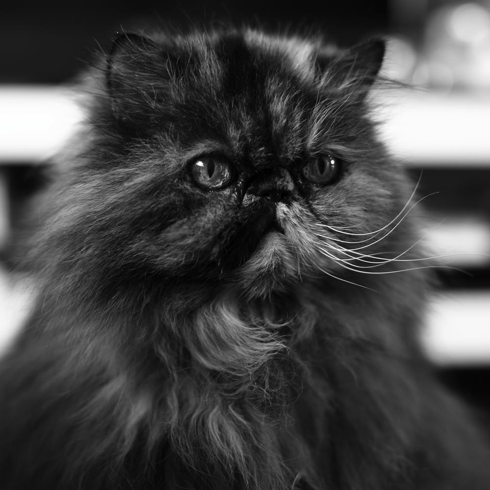 Animal_PhotoC