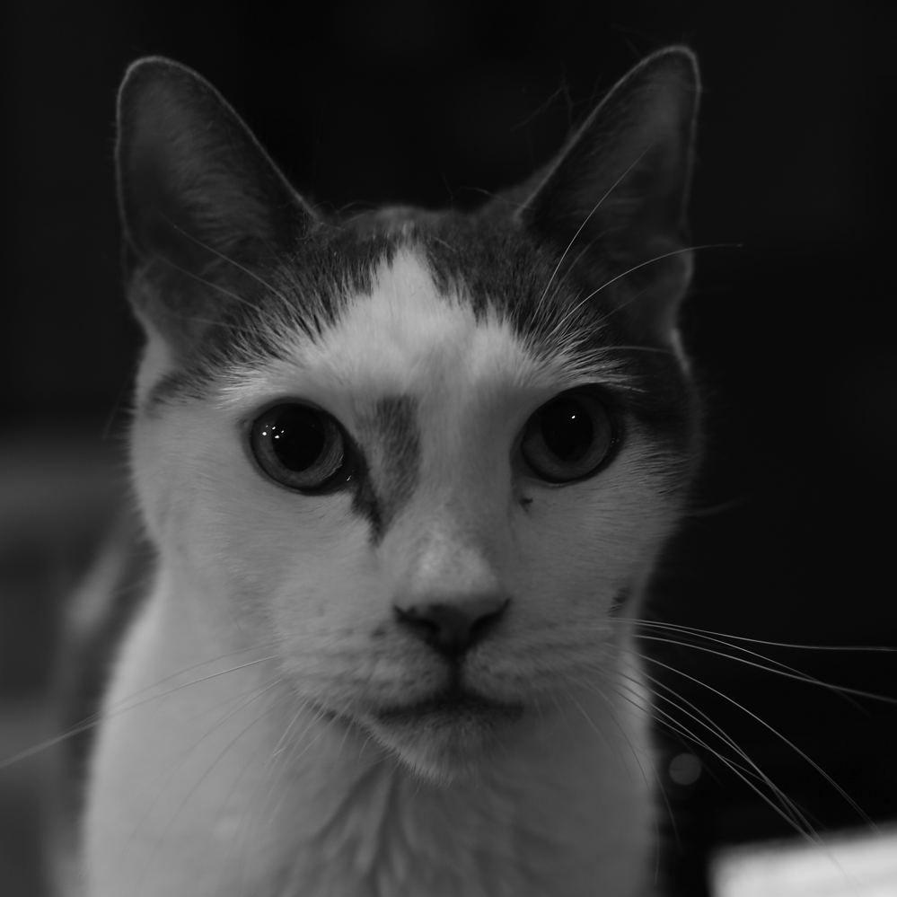 Animal_PhotoG
