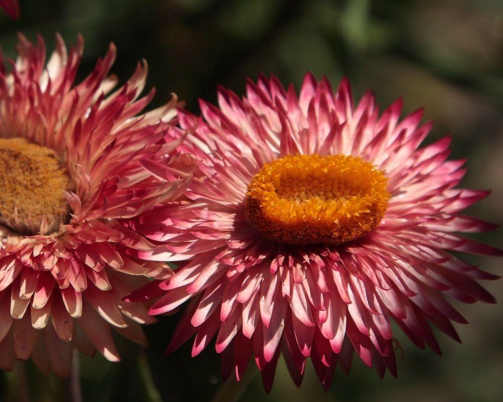 chalk-hill-flower-2