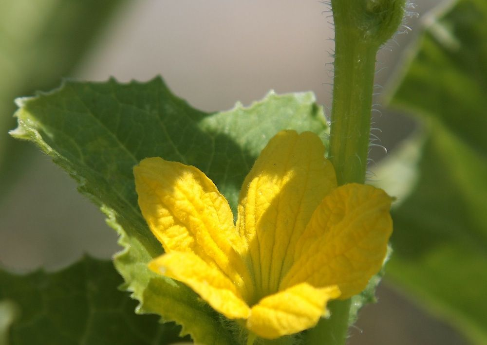 chalk-hill-flower