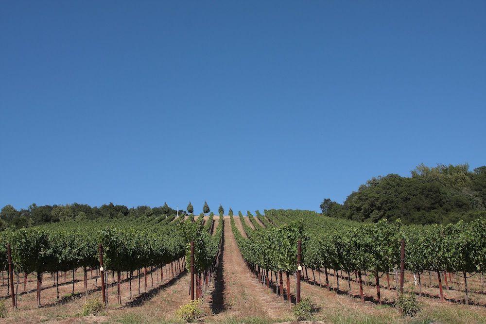 chalk-hill-winery-vineyard