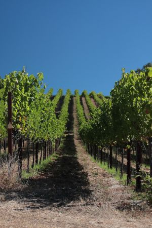 Chalk Hill Vineyards 2.jpg